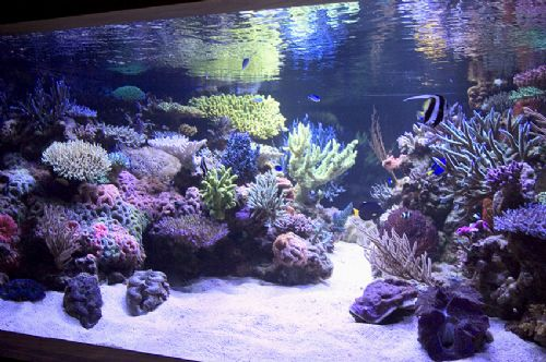 Getting A Large Aquarium Into Basement Wmas Message Board
