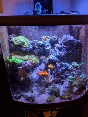 150 gallon Tank Automation with Reef-Pi - WMAS Message Board