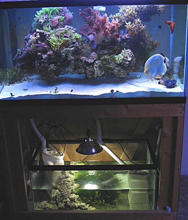 how to make an easy effective refugium wmas message board
